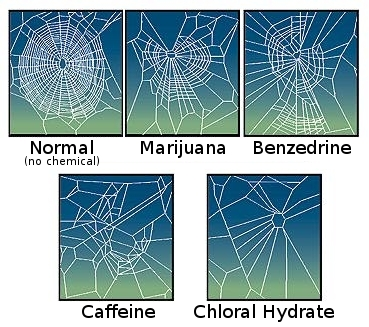 Spiders spin strange webs under the influence of drugs