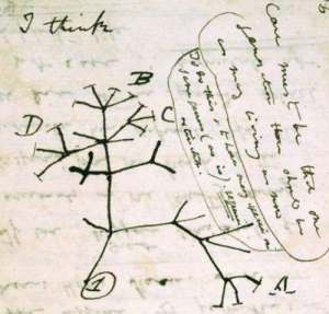 Darwin's phylogenentic tree. Also known as the tree of life.